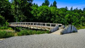 Hiking Walking And Exploring The Beautiful Green And Natural Tolmie State Park In Nisqually Washington On A Bright Late Spring Aft. The wood bridge that connects stock image