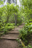 Hiking or Walking Path with Steps Royalty Free Stock Image