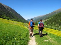 Hiking walking trekking in Alps in Italy spring and summer. South Tyrol, Italy - June 18, 2013: Two men with backpacks walk through a green valley dotted with Royalty Free Stock Image