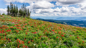 Hiking among the Wild Flowers Royalty Free Stock Photo