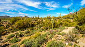 Hiking on the Wind Cave Trail of Usery Mountain surrounded by Large Boulders, Saguaro and other Cacti Royalty Free Stock Photos