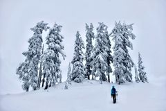 Hiking in winter forest after heavy snowfall. Mount Hood National Forest. Portland. Oregon. United States stock image