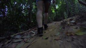 Hiking woman trekking in rainforest jungle stock footage