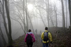 Hiking in the wood on a foggy day nature 3 Royalty Free Stock Images
