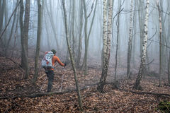 Hiking in the wood on a foggy day nature 5 Stock Photography