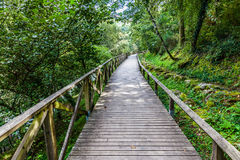 Hiking wooden passage or path Royalty Free Stock Photography