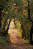 Hiking through woods Stock Image