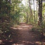 Hiking through the woods Stock Photos