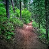 Hiking in the woods Royalty Free Stock Photo