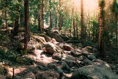 Hiking in the woods. Walking path in a warm sunny forest. royalty free stock images