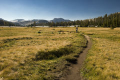 Hiking through the Yosemite National Park. The vast beauty of the Yosemite mountains in the Yosemite National Park in California stock photos
