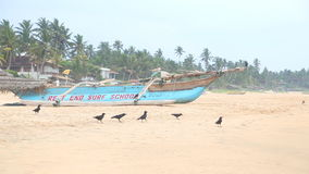 HIKKADUWA, ШРИ-ЛАНКА - ФЕВРАЛЬ 2014: Взгляд пляжа Hikkaduwa пока волны брызгают и птицы около океана Hikkaduw сток-видео
