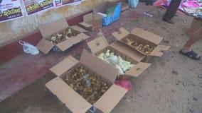 HIKKADUWA, SRI LANKA - FEBRUAR 2014: Ansicht von Küken und von Entlein an Hikkaduwa-Markt Markt Hikkaduwa Sonntag bekannt für sei stock footage