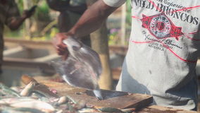 HIKKADUWA, SRI LANKA - FEBRUAR 2014: Bemannen Sie Ausschnitt- und Reinigungsfische an Hikkaduwa-Markt Markt Hikkaduwa Sonntag bek stock video footage