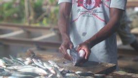 HIKKADUWA, SRI LANKA - FEBRUAR 2014: Bemannen Sie Ausschnitt- und Reinigungsfische an Hikkaduwa-Markt Markt Hikkaduwa Sonntag bek stock video
