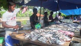 HIKKADUWA, SRI LANKA - FEBRUAR 2014: Bemannen Sie Ausschnitt- und Reinigungsfische an Hikkaduwa-Markt Markt Hikkaduwa Sonntag bek stock footage