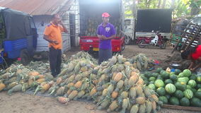 HIKKADUWA, SRI LANKA - FEBRUAR 2014: Einheimische, welche die Frucht und Leute vorbei überschreiten an Hikkaduwa-Markt verkaufen  stock video footage