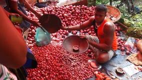 HIKKADUWA, SRI LANKA - FEBRUAR 2014: Lokaler Mann, der Tomaten an Hikkaduwa-Markt verkaufend sitzt Markt Hikkaduwa Sonntag bekann stock footage