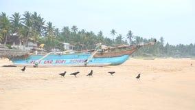 HIKKADUWA, SRI LANKA - FEBRUARY 2014: View of Hikkaduwa beach while waves are splashing and the birds are near the ocean. Hikkaduw stock video