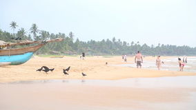 HIKKADUWA, SRI LANKA - FEBRUARY 2014: View of Hikkaduwa beach while waves are splashing and the birds are near the ocean. Hikkaduw stock footage