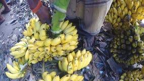 HIKKADUWA, SRI LANKA - MÄRZ 2014: Ansicht des Mannes Bananen für den Verkauf am lokalen Markt in Sri Lanka zubereitend stock video