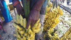HIKKADUWA, SRI LANKA - MÄRZ 2014: Ansicht von bewegenden hängenden saftigen Bananen des Mannes am lokalen Markt stock video
