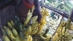 HIKKADUWA, SRI LANKA - MÄRZ 2014: Ansicht von bewegenden hängenden saftigen Bananen des Mannes am lokalen Markt stock video footage