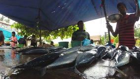 HIKKADUWA, SRI LANKA - MÄRZ 2014: Einheimische, die ihre frischen Fische am Sonntags-Markt verkaufen stock video