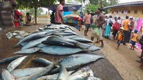 HIKKADUWA, SRI LANKA - MÄRZ 2014: Frische Fische auf dem Tisch am Markt in Sri Lanka, Kunden, die vorbei überschreiten stock footage