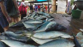 HIKKADUWA, SRI LANKA - MÄRZ 2014: Frische Fische auf dem Tisch am Markt in Sri Lanka, Kunden, die vorbei überschreiten stock video footage
