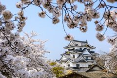 Hikone Castle Royalty-vrije Stock Afbeeldingen