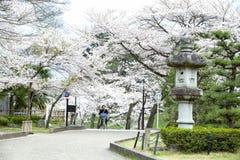 Hikone Castle cherry Stock Photo