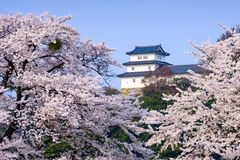Hikone Castle Royalty Free Stock Photo