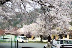 Hikone Castle körsbär Royaltyfria Bilder