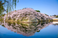 Hikone Castle Moat Royalty Free Stock Photo
