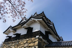 Hikone Castle som filialer av trädet för körsbärsröd blomning Fotografering för Bildbyråer