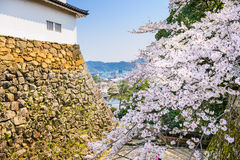 Hikone Castle Spring Fotografie Stock Libere da Diritti