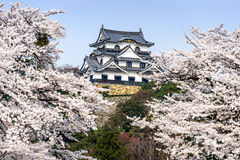 Hikone Castle in the Spring Royalty Free Stock Image