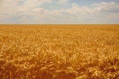 Hilado del trigo con la riqueza de la tierra imagenes de archivo