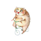 Hilarious animal on a bicycle. Funny hedgehog on a bicycle, pencil drawing, illustration Stock Photography
