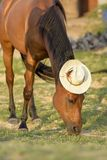 Funny portrait of a horse with a straw hat on its head stock photography
