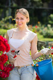Hilarious young woman working with bush roses with horticultural. Tools in garden on sunny day Stock Photography