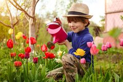 Free Сhild In The Garden Watered Flowers From A Watering Can In The Summer. Kid Gardener Has Fun Working In The Park In Spring. A Boy Royalty Free Stock Photo - 189860515