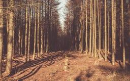 Hilera de árboles Foto de archivo libre de regalías