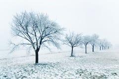 Hilera de árboles del invierno en un campo Foto de archivo