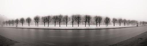 Hilera de árboles en el camino del invierno Fotografía de archivo
