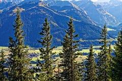 Hilera de árboles alpina de las montañas de Allgäu Imagen de archivo