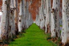 Hileras de árboles Fotografía de archivo libre de regalías