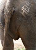 Hilfetext auf Elefant-Rückseite Stockfotografie