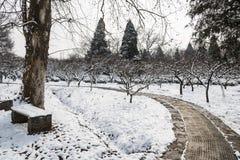 Hill ανθών δαμάσκηνων snowscape Στοκ φωτογραφία με δικαίωμα ελεύθερης χρήσης